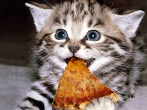 kitten-and-pizza